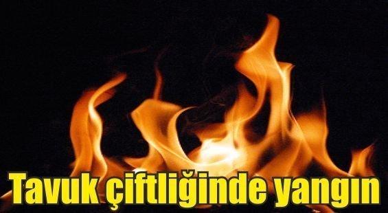 Pazarköy'de tavuk çiftliğinde yangın