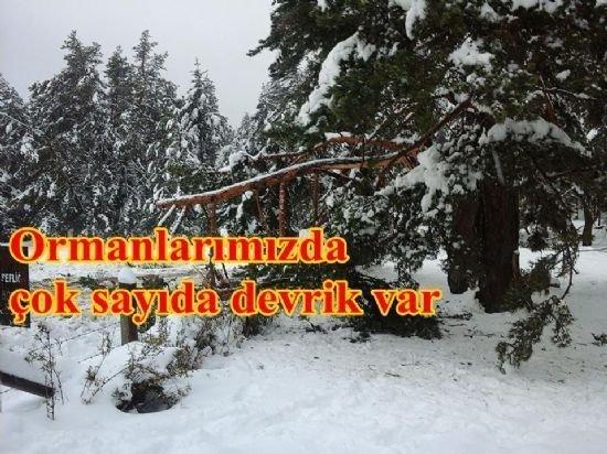 Ormanlarımızda çok sayıda ağaç devrildi