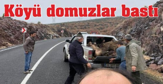 Köyü Domuzlar Bastı