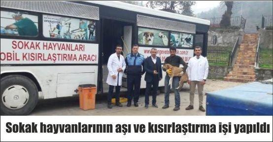 Göynük'de Sokak Hayvanlarına Aşı ve Kısırlaştırma Yapıldı
