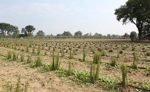 Bolu'da 'Aromatik Bitkiler Bahçesi'