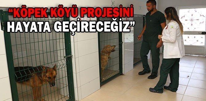 """""""KÖPEK KÖYÜ PROJESİNİ HAYATA GEÇİRECEĞİZ"""""""